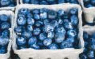 Кустарник с синими ягодами. Магония падуболистная – красивый кустарник с целебными ягодами