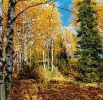 Тополя осенью фото. Деревья и кустарники осенью. Осенние изменения. Почему листья желтеют и опадают.