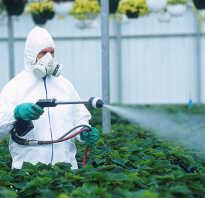 Пестициды как влияют на человека. Влияние пестицидов на здоровье человека