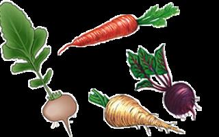 Корнеплоды список. Овощи корнеплоды список