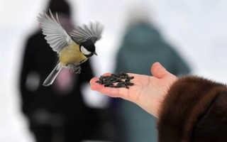 Кормить птиц рисом. Чем нельзя кормить зимой птиц?