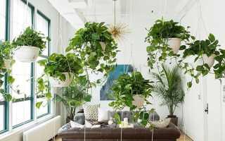 Комнатная лиана фото. Комнатные вьющиеся растения: фото, названия, описание