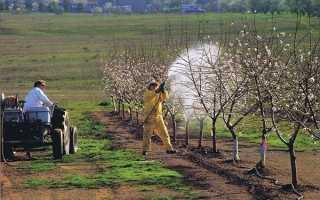 Опрыскать яблоню железным купоросом. Опрыскивание яблонь медным купоросом весной