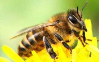 Медовая сыта для подкормки пчел осенью. Медовая сыта для пчел