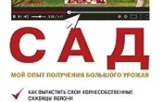 Садовая клубника выращивание и уход в сибири. Секреты выращивания клубники в Сибири и ухода за ней в холодном климате
