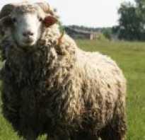 Хлев для овец овчарня 6 букв. То же, что овчарня