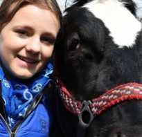 Красивые клички для коров. Выбор клички для коровы