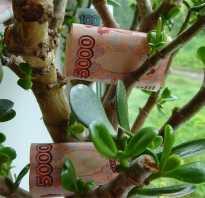 Когда сажать денежное дерево по лунному календарю. 3 лунный день