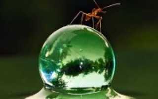 Почему появляются муравьи в доме. К чему появляются муравьи в доме?
