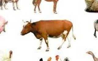 Корова описание для детей. Рассказ о корове для детей 5-8 лет