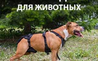 Окситоцин собаке при родах. Окситоцин: как колоть кошке и собаке