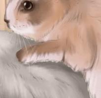 Что делать если крольчиха не гуляет. Почему крольчиха не покрывается