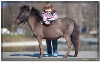 Фалабелла лошадь фото. Миниатюрные лошади породы фалабелла (24 фото)