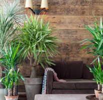 Почва для пальм. Почва для посадки пальмовых комнатных растений