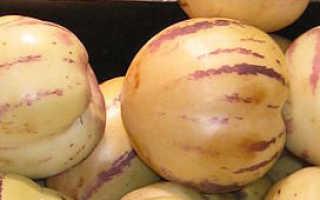 Пепино консуэло выращивание из семян. Пепино: выращивание в домашних условиях экзотического растения с вкусными плодами