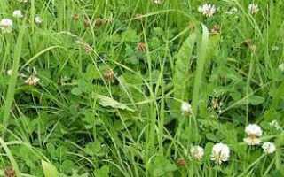 Можно ли кроликам свежую траву. Какую траву можно давать кроликам