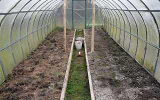 Чем обработать теплицу от мха. Что делать, если земля в теплице стала зеленая?