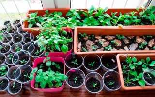 Посадить рассаду цветов дома. Как вырастить рассаду цветов