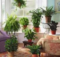 Почему нельзя дома держать лиану. Запрещенные для дома цветы. Приметы