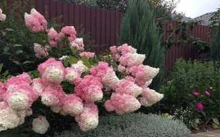 Съедобные кустарники для сада. Топ 10 кустарников с плодами для украшения сада осенью и зимой