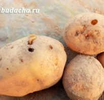 Табу для картошки. Табу для картофеля: отзывы, инструкция, применение