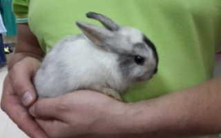 Фото декоративных кроликов разных пород. Обзор декоративных пород кроликов