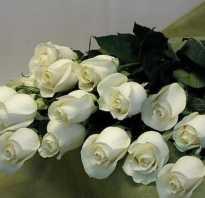 Можно ли дарить девушке белые розы. Все новости