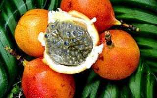 Фрукт гранадилла как его есть. Фрукт гранадилла – как едят, описание экзотического растения
