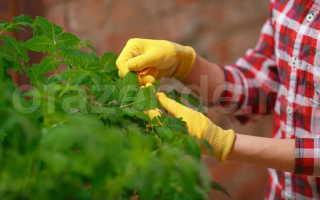 Секреты посадки томатов. Секреты выращивания помидоров