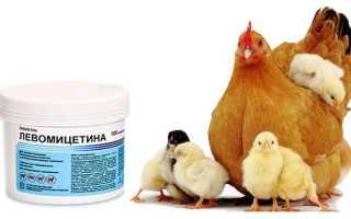 Левомицетин для кур дозировка. Антибиотики для кур: особенности выбора