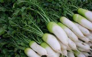 Турнепс что это за овощ. Турнепс – что это такое и можно ли употреблять в пищу?