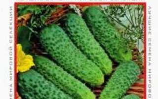Огурец циркон. Огурец Циркон F1, 6 шт. Профессиональные семена