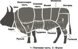 Части тела быка. Описание частей тела коровы