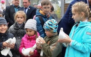 Питомник голубей в алтайском крае. Барнаульских монахов и алтайских шавелевых показали ребятам в голубином питомнике