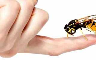 Лечение пчелами в домашних условиях. Апитерапия – лечение укусами пчел