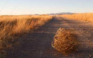 Режимы хранения столового картофеля. Как и где нужно хранить картофель
