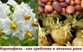 Цветки картофеля от рака. Цветки картофеля в народной медицине. Народные средства, рецепты