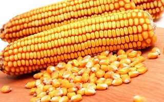 Кукуруза злак. Кукуруза: овощ или фрукт, характеристика, происхождение и строение
