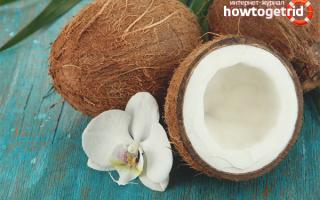 Сушеный кокос польза. Кокос: польза и вред для человеческого организма