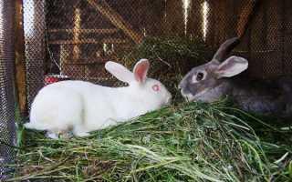 Почему крольчиха не подпускает к себе крола. Крольчиха отказывается от кроля: решаем проблему вместе!