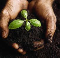 Обработка почвы перед посадкой рассады. Как обеззаразить землю перед посадкой рассады