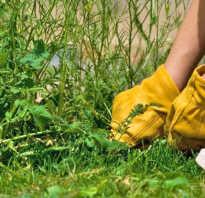Почему не выкапывать сорняки осенью. Как победить сорняки?