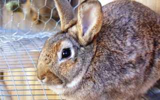 Почему кролики поносят. Понос у кроликов — причина и лечение