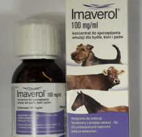 Шампунь имаверол. частые вопросы об имавероле