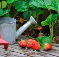 Можно ли поливать клубнику во время цветения. Можно ли поливать клубнику во время цветения?