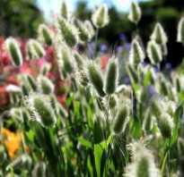 Сухоцветы фото и названия однолетние. Сухоцветы: фото и названия лучших видов, подходящих и для сада, и для создания букетов
