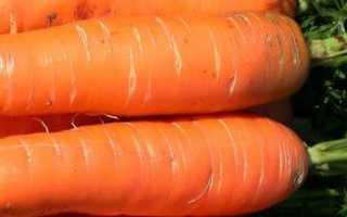 Полив моркови в открытом грунте. Как часто поливать морковь в открытом грунте после посадки?