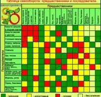 Предшественники для капусты. Севооборот овощных культур: таблица, предшественники овощей, организация чередования на даче.