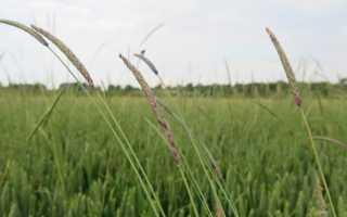 Культурные растения травянистые примеры. Травянистые растения