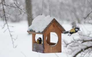Можно ли кормить птиц гречкой зимой.